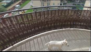 Декорирование ограждения на балконе